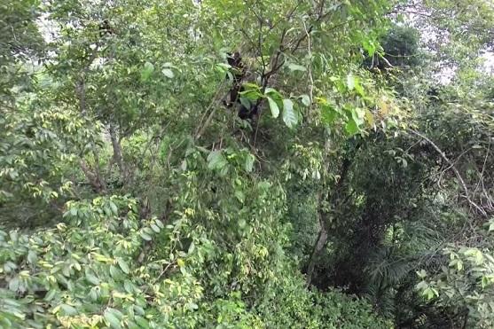 Opice v korunách stromů | Zdroj: video