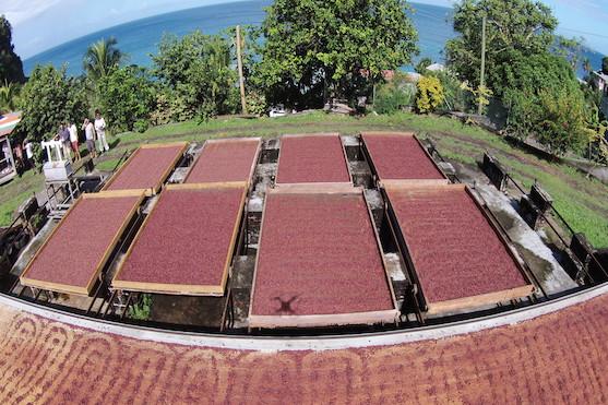 Pohled na střechy, kde se suší kakaové boby | dji.com