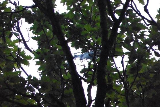 spyrit-na-stromě