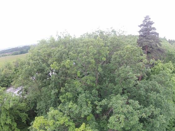 Model kvadrokoptéry Spyrit T2M uvíznutý v koruně stromu