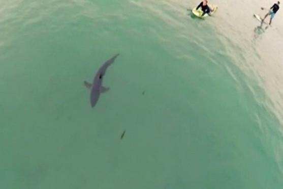 Žralok nedaleko pláže | Zdroj: interdrone.com