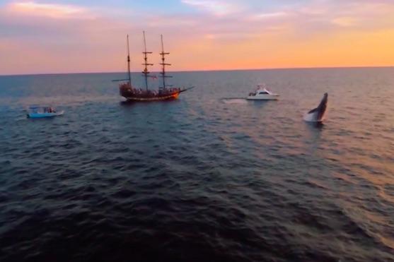 Skok velryby při západu slunce | Zdroj: video